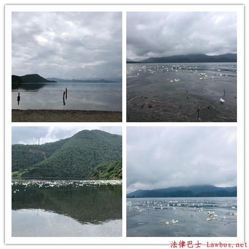 泸沽湖里的水性杨花.jpg